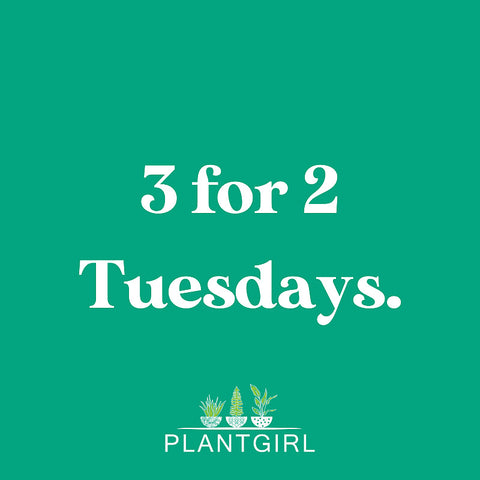 Buy two plants get the third for free at PlantGirl on Tuesdays.