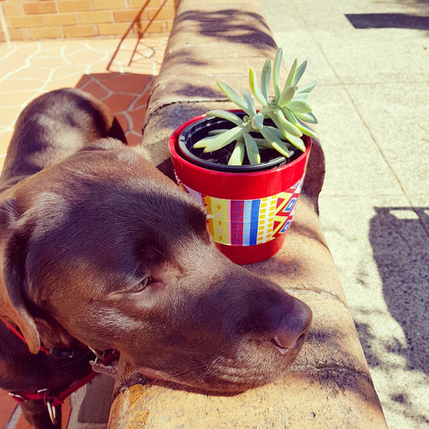 Dog looking relaxed next to plant