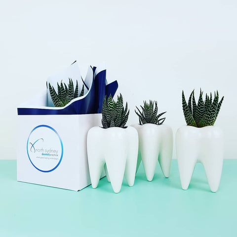 Tooth plants - dentist - plantgirl corporate
