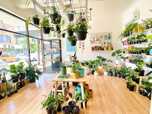 PlantGirl shop located in Marrickville, Sydney.