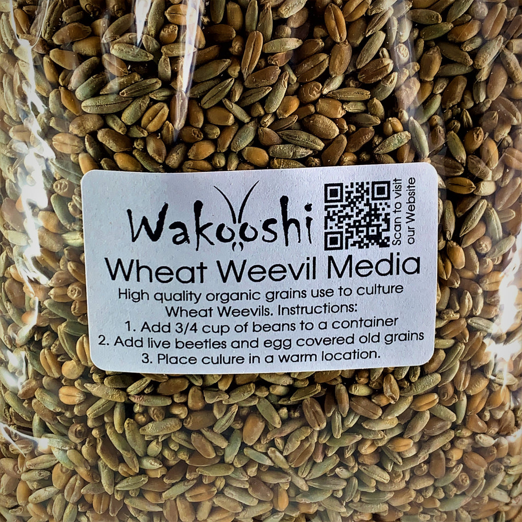 Wheat Weevil Culture Media