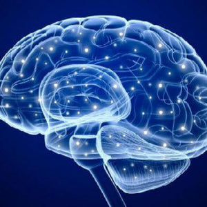 Brain Implant Improves Memory