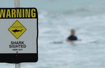 Shark Shield deterrent gets Choice tick of approval