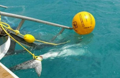 How Australian shark attack prevention technology can stop deaths