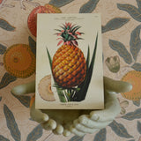 Tin box with 20 Exotic fruits vintage cards