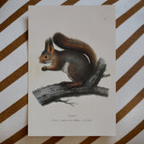 Squirrel vintage style card, Sköna Ting, Dessin Design