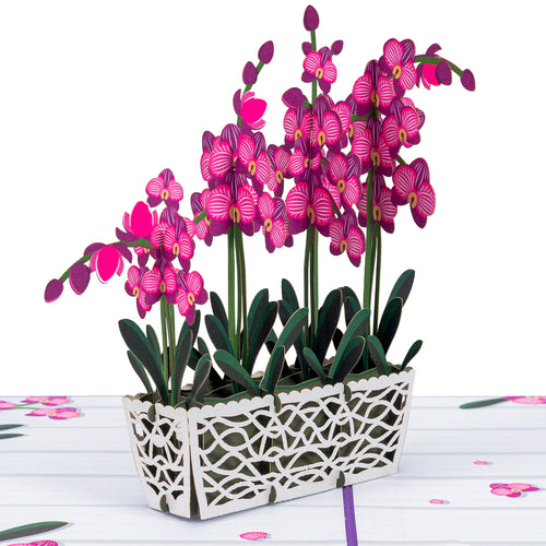 Orchids Pop Up Card