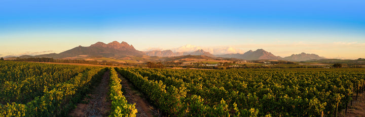 Prescient Pinotage Report 2020: Top 10