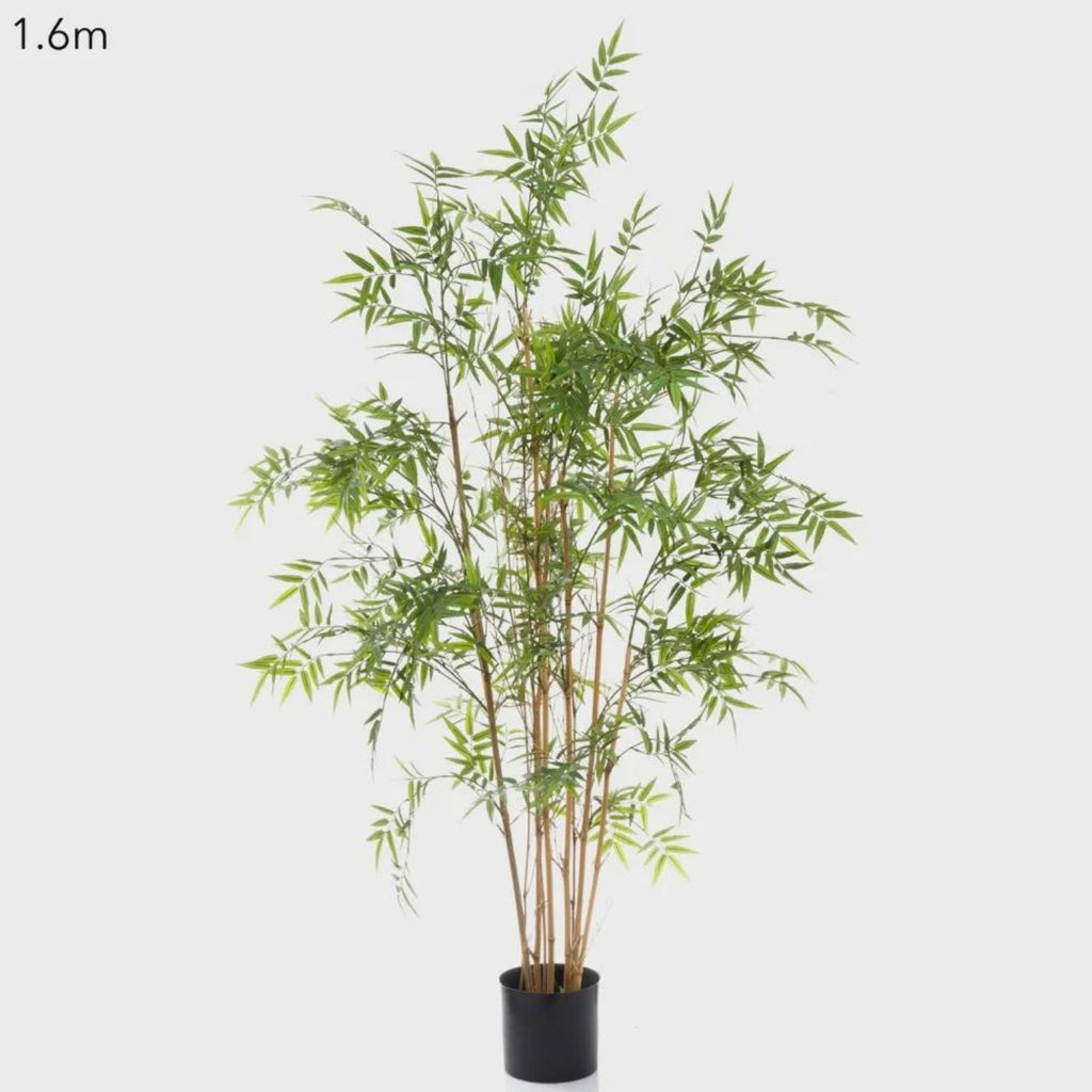 Oriental Bamboo Tree 1.6M-thenestsw