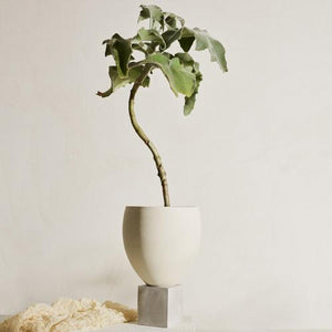 Eleva Snow Tabletop Planter