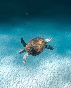 Speedy Sea Turtle