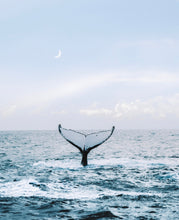 Load image into Gallery viewer, Whale Dreaming