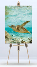 Load image into Gallery viewer, Sea Turtle