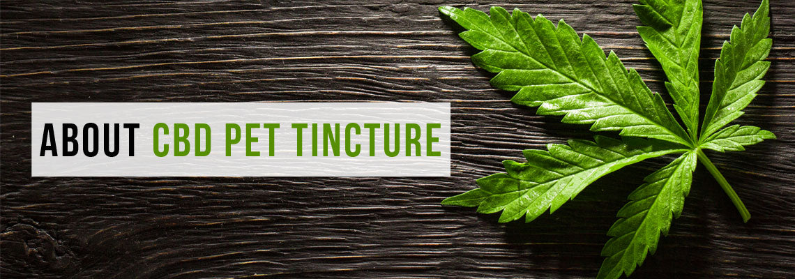 About CBD Pet Tincture
