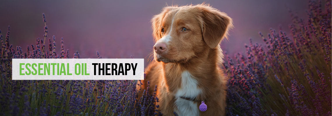 Aromatherapy Products for Pets