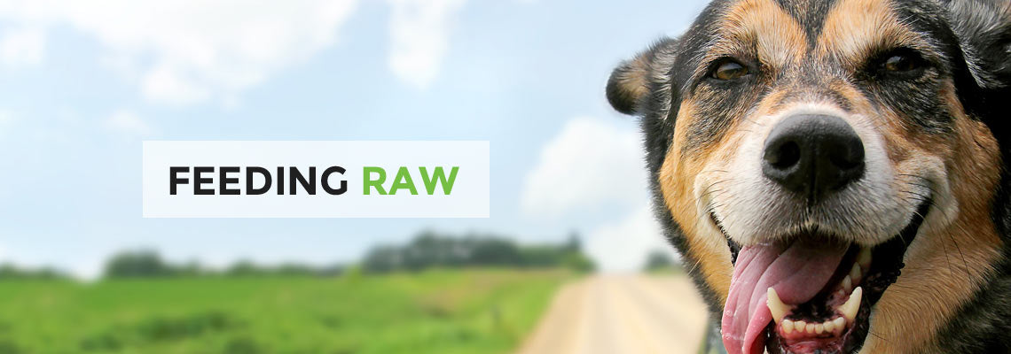 Feeding Pets Raw Food