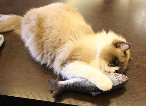 Catnip Stuffed Cat Carp - Great Gadgets