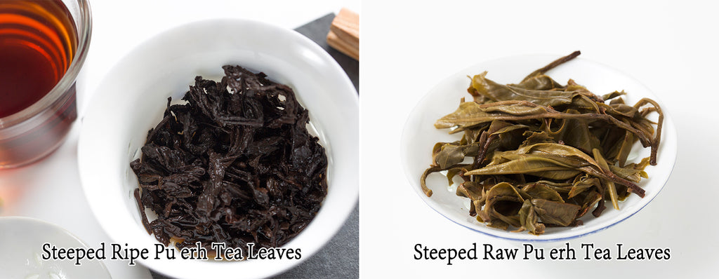 Steeped ripe pu erh tea leaves vs steeped raw pu erh tea leaves