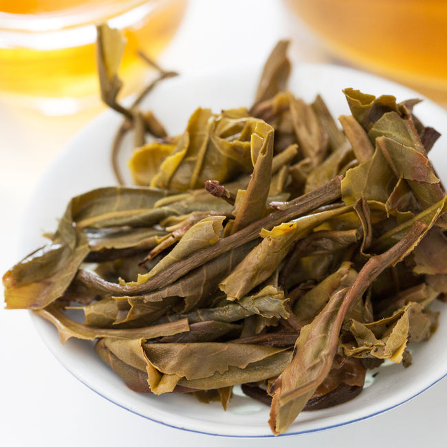 Lao Ban Zhang pu erh tea infused leaves