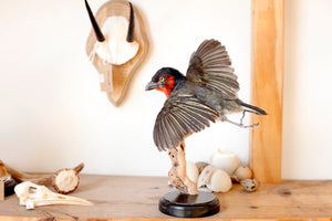 taxidermy bird in flight, skulls, antlers, antelope, horns