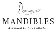 Logo of Mandibles. Mandibles sells taxidermy, skulls, natural history