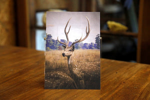 Axis Deer postcard