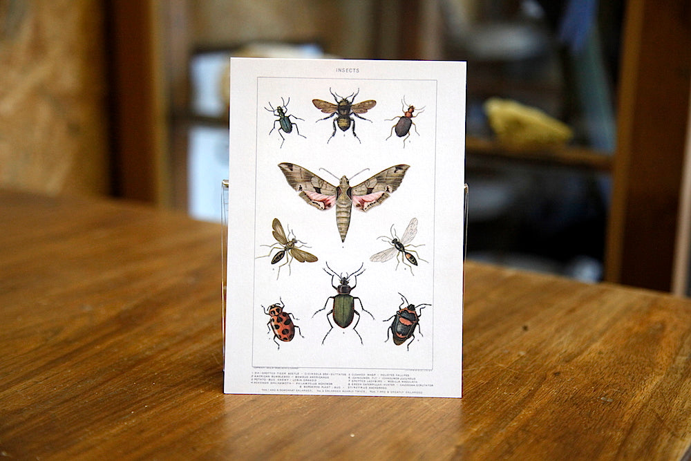 Insect postcard