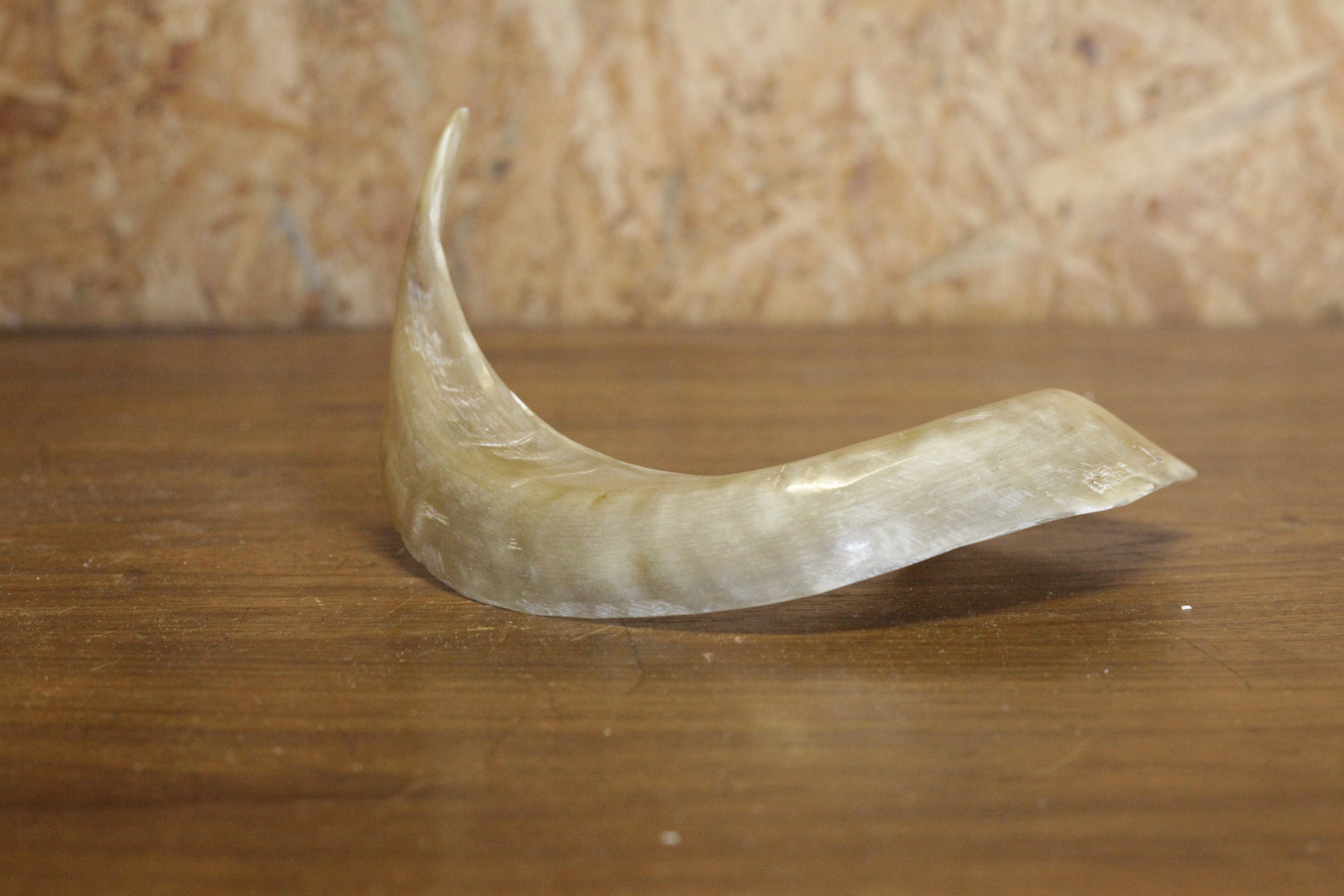 Merino horn, polished