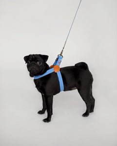 harness_concept-pet.com