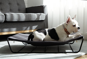 Hammock for pets