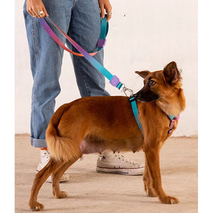 Wave dog leash