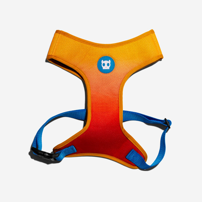 Solaris harness for dogs