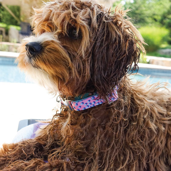 Monro Pets dog collars are stylish and perfect for everyday wear.