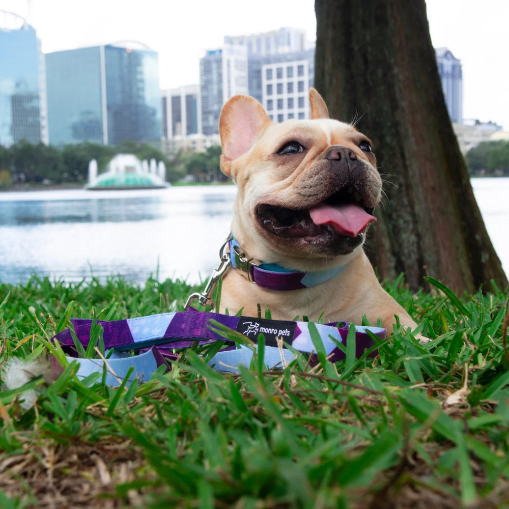 Mimosa the french bulldog resting and wearing Metric Floral dog collar and leash