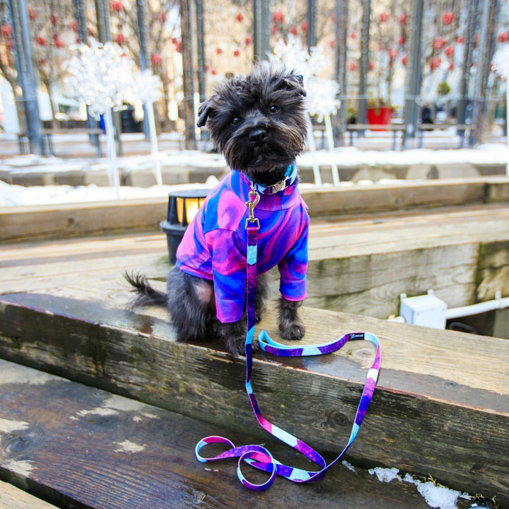 Bacon the Dogger wearing Metric Floral dog collar and leash with matching shirt