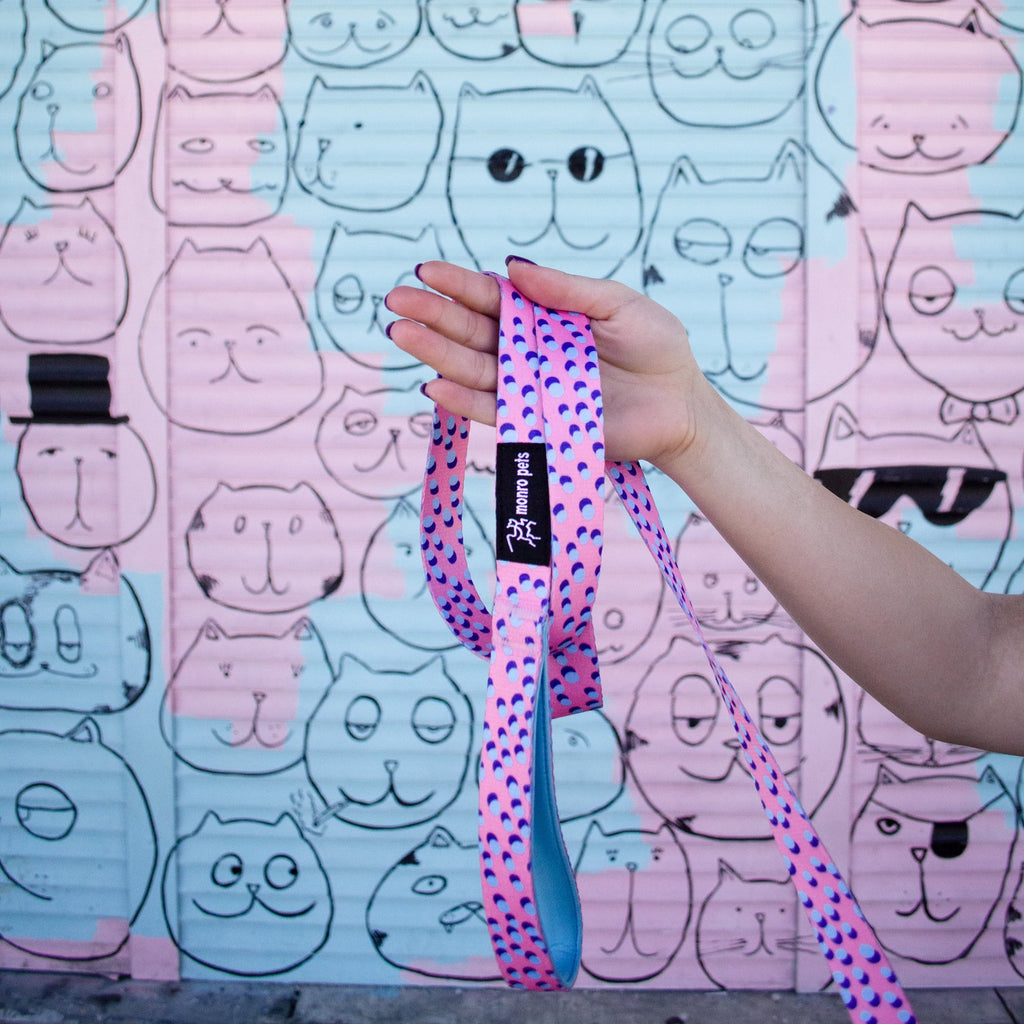 Kawaii Pinku - 6 Foot Dog Leash - Orlando Florida - Wall Art - Close Up Photo