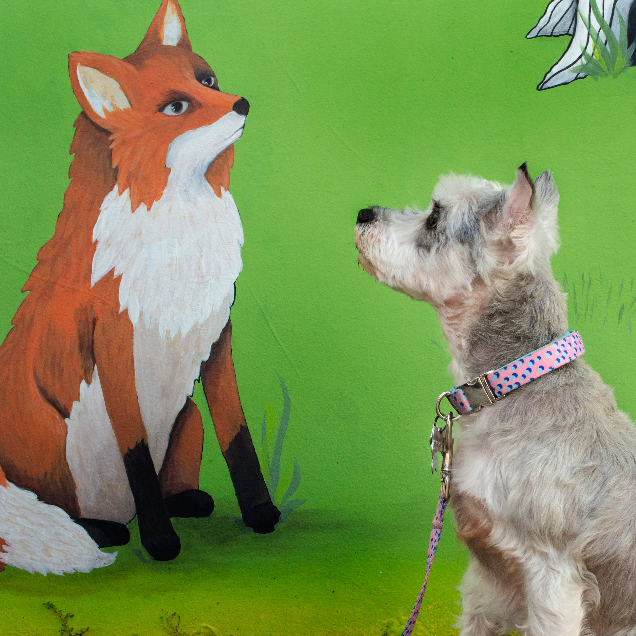Kawaii Pinku - Padded Dog Collar - 6 Foot Dog Leash With Padded Handle - Orlando Florida - Wall Art - Mia Facing the Fox Painting on the Wall - Schnauzer