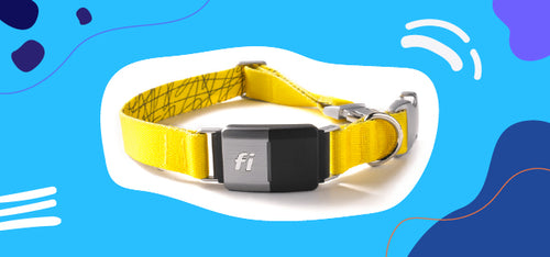 A smart dog collar with tracking