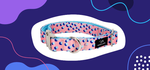 a padded dog collar with polyester and neoprene.