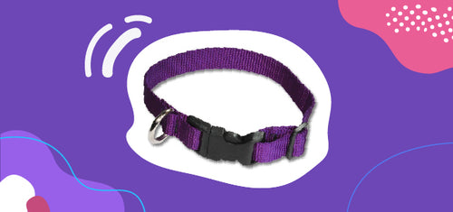 a flat dog collar, which can be made of nylon or polyester.