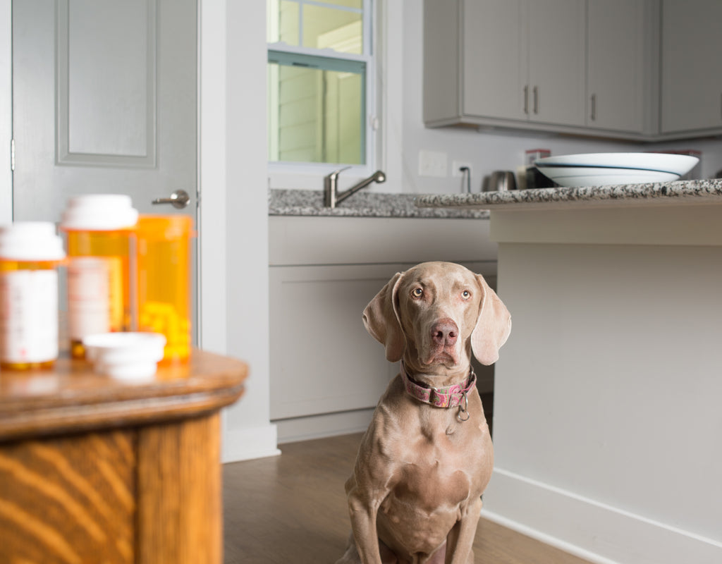 Meloxicam for Dogs: Side Effects to Look For