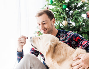 Holiday Foods that are Bad for Dogs: A Guide