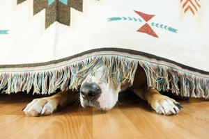Separation Anxiety: Getting the Best of Your Dog
