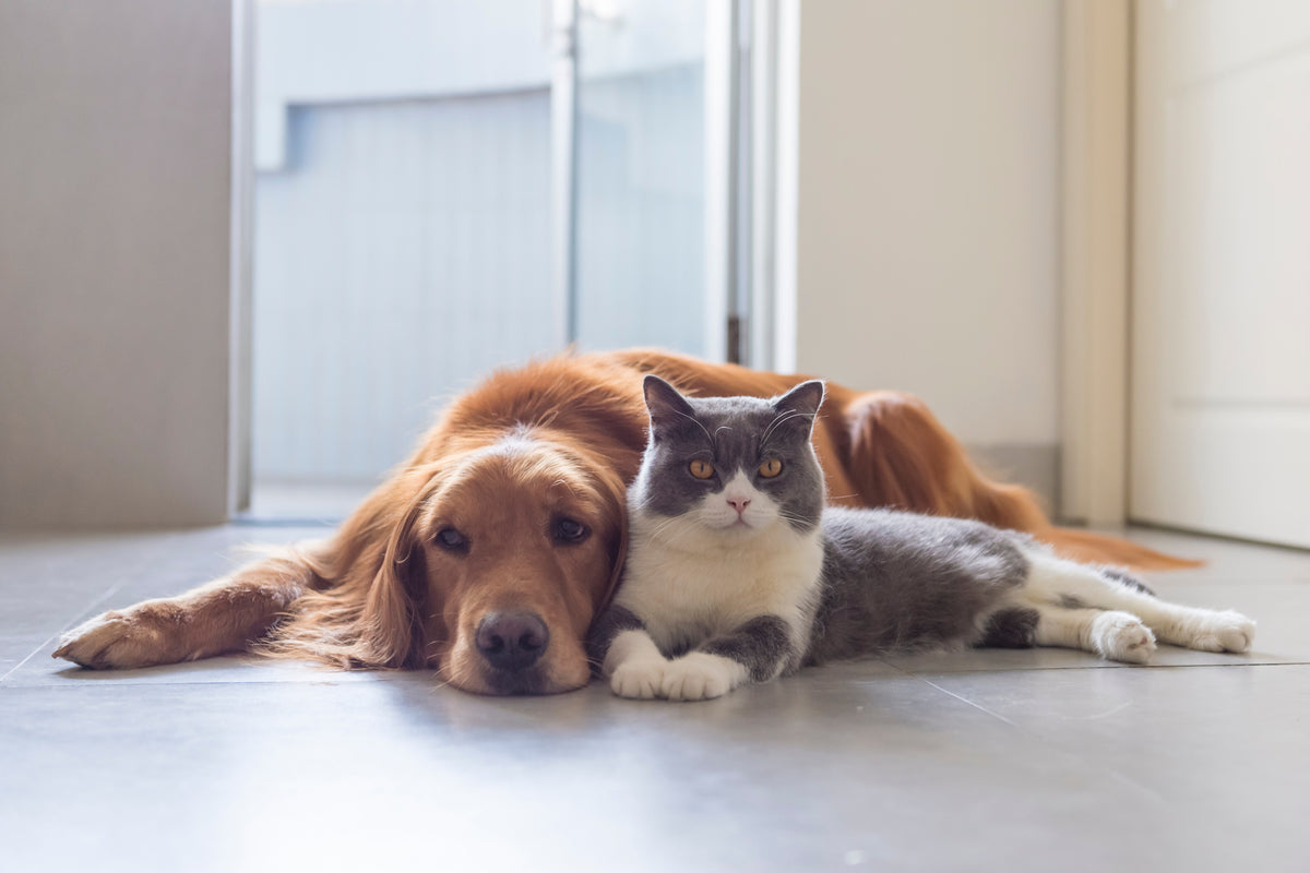 Atopica for Dogs and Cats: The Benefits and Risks