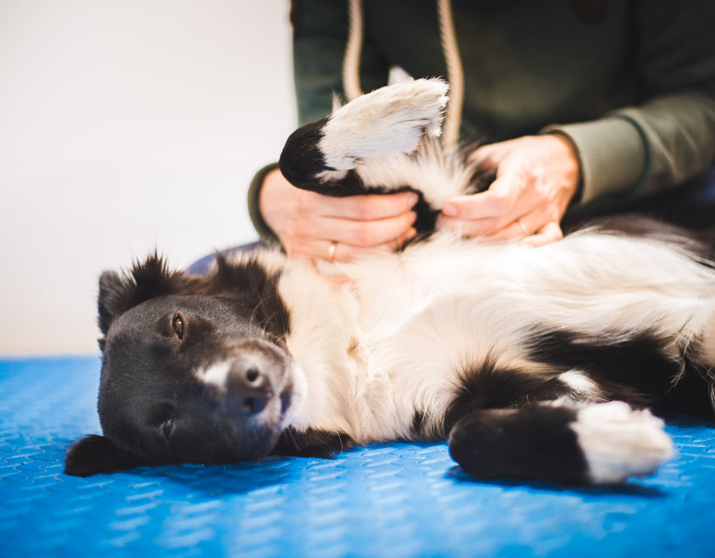 The Benefits Canine Massage: Soothing Successes