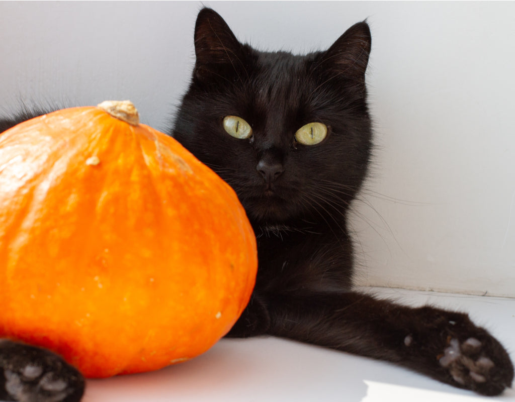 Pumpkin for Cats: A Guide