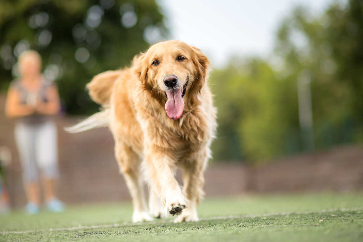 Glucosamine for Dogs: What to Know
