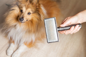 How to Get Your Dog's Shedding Under Control