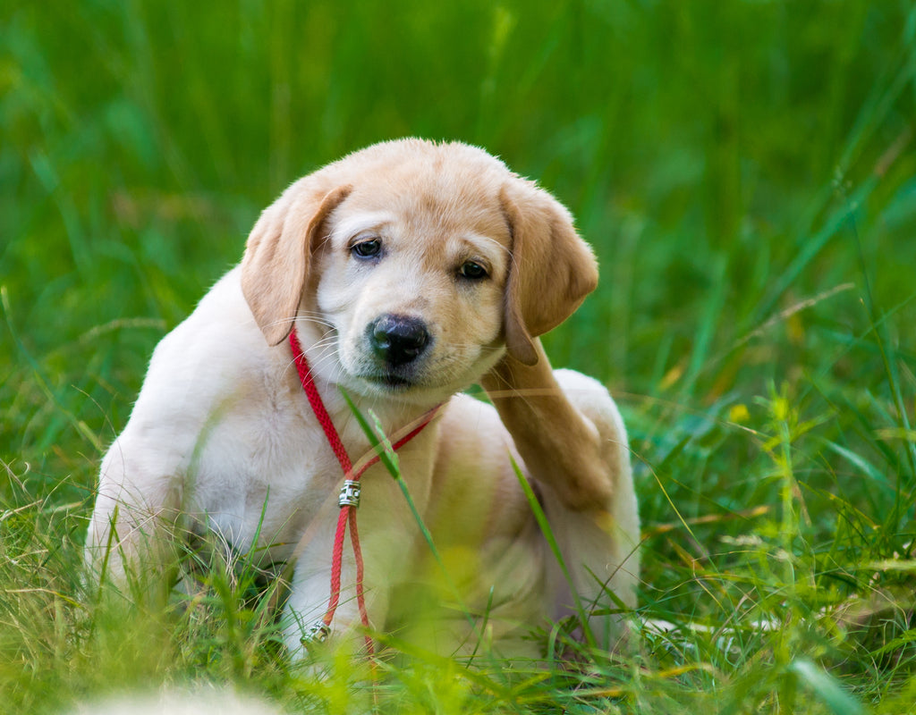 Top 10 All Natural Anti-Inflammatories for Dogs