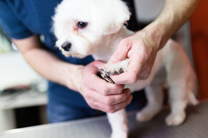 The Importance of Dog Nail Trimming